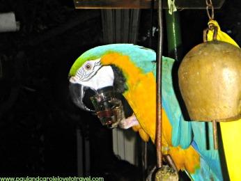 Parrot Bar