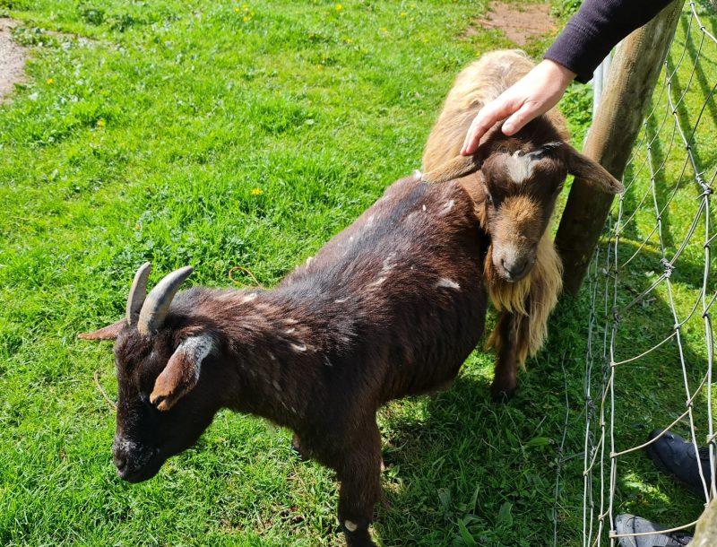 Goats Greenway Farm Campsite